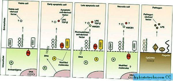 Global Antigen Permukaan Leukosit CD47 Market