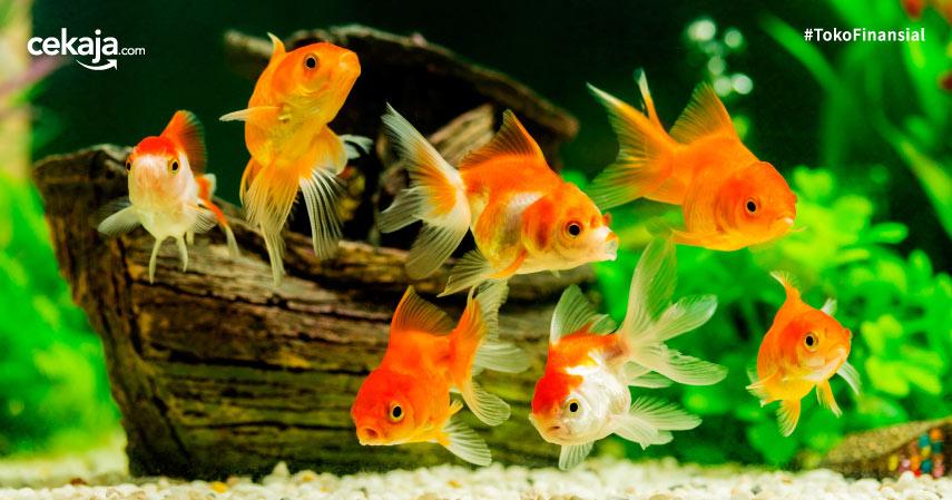 Global Ikan Hias Market