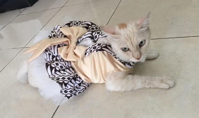 Global Pakaian hewan peliharaan Market