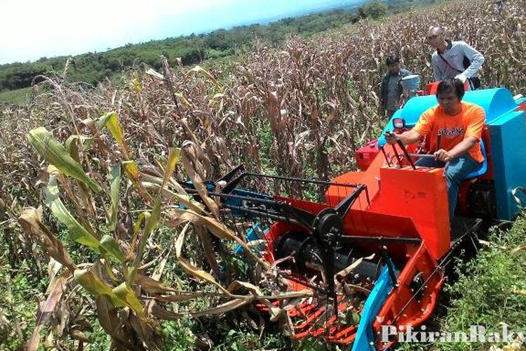 Global Pemanen jagung Market