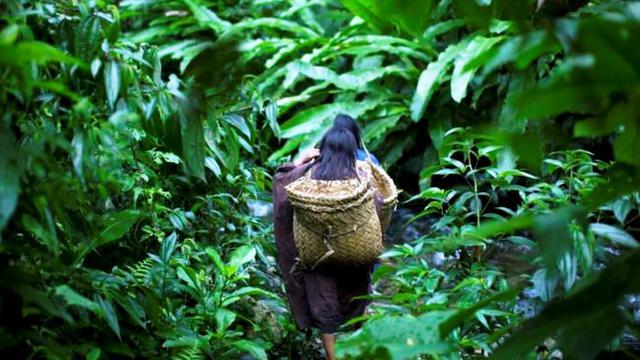 Global Pohon Produksi Bawah Laut Market