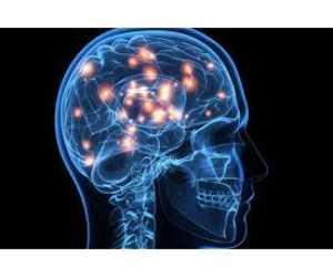 Global Implan Otak Wawasan Pasar