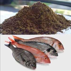Makanan ikan Pasar